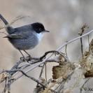 Ocells al camí de la Bleda