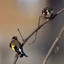Ocells en un matí fred