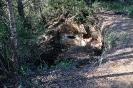 02 Col·lectiu Bosc Verd